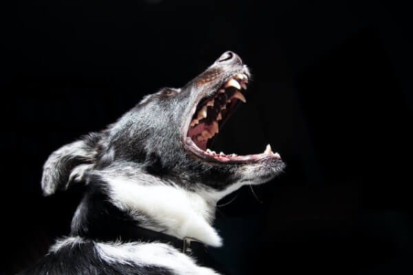 personal-injury-template-dog-bite-img